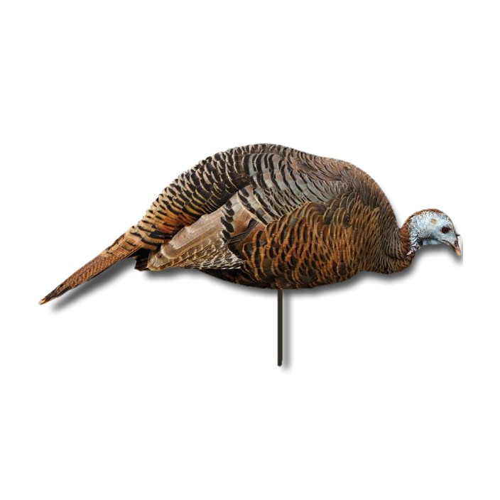 Montana Decoy CO Dinner Belle Hen Decoy